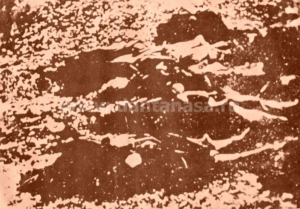 Treznea, 9 septembrie 1940. O parte din cei 243 de țărani români morți și răniți de honvezii unguri, printre care și copii