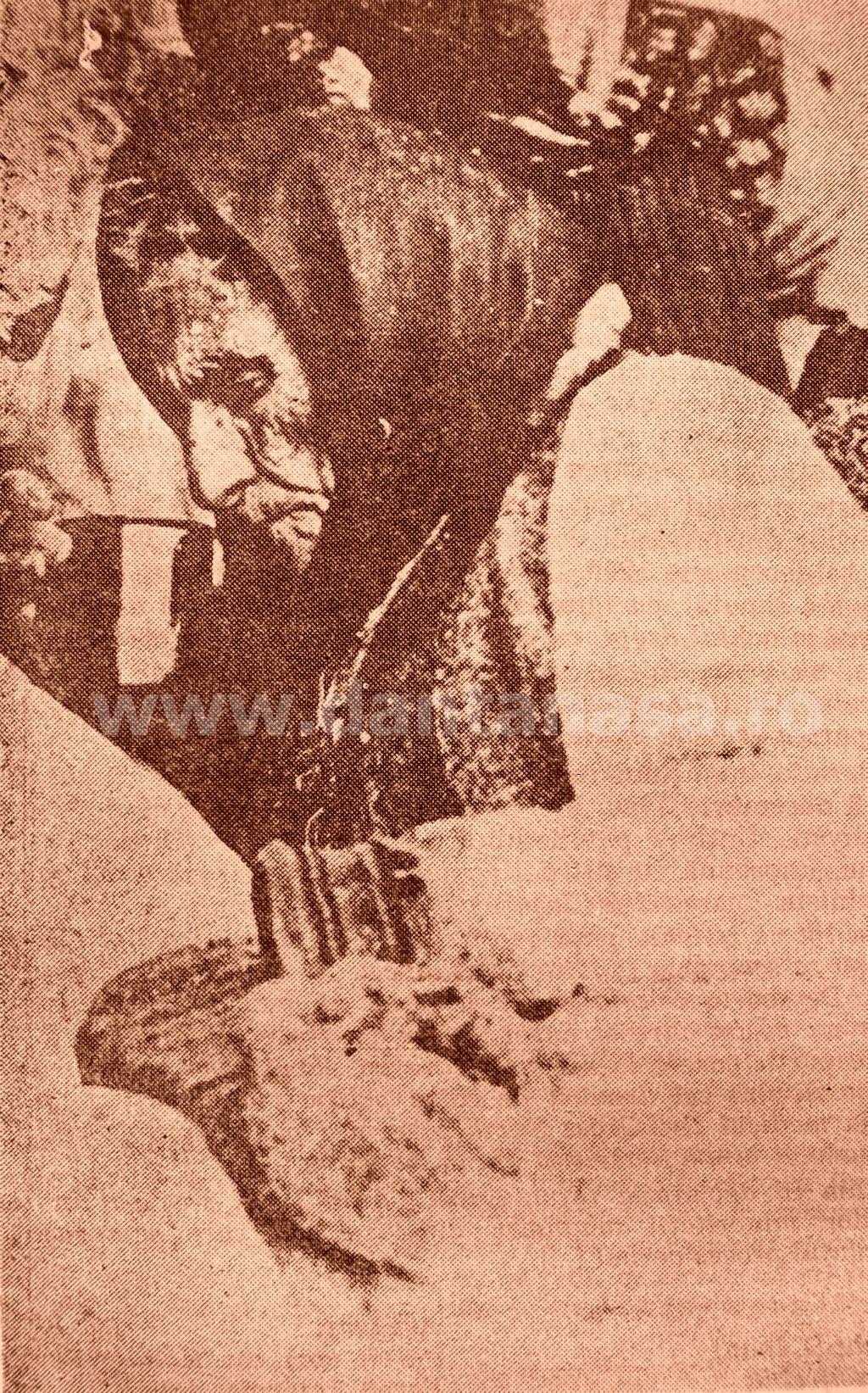 1940, sat Mihai Bravu, jud. Bihor. Țărancă româncă de 82 de ani expulzată de unguri de la vatră.