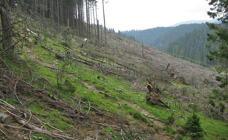 padure-defrisare-lemn